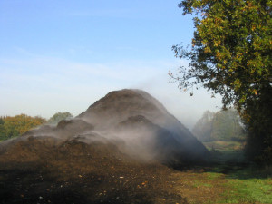 Coniferen bemesten met compost